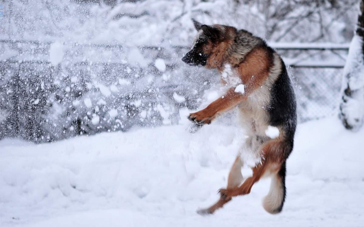 Прикольная Собака - фото