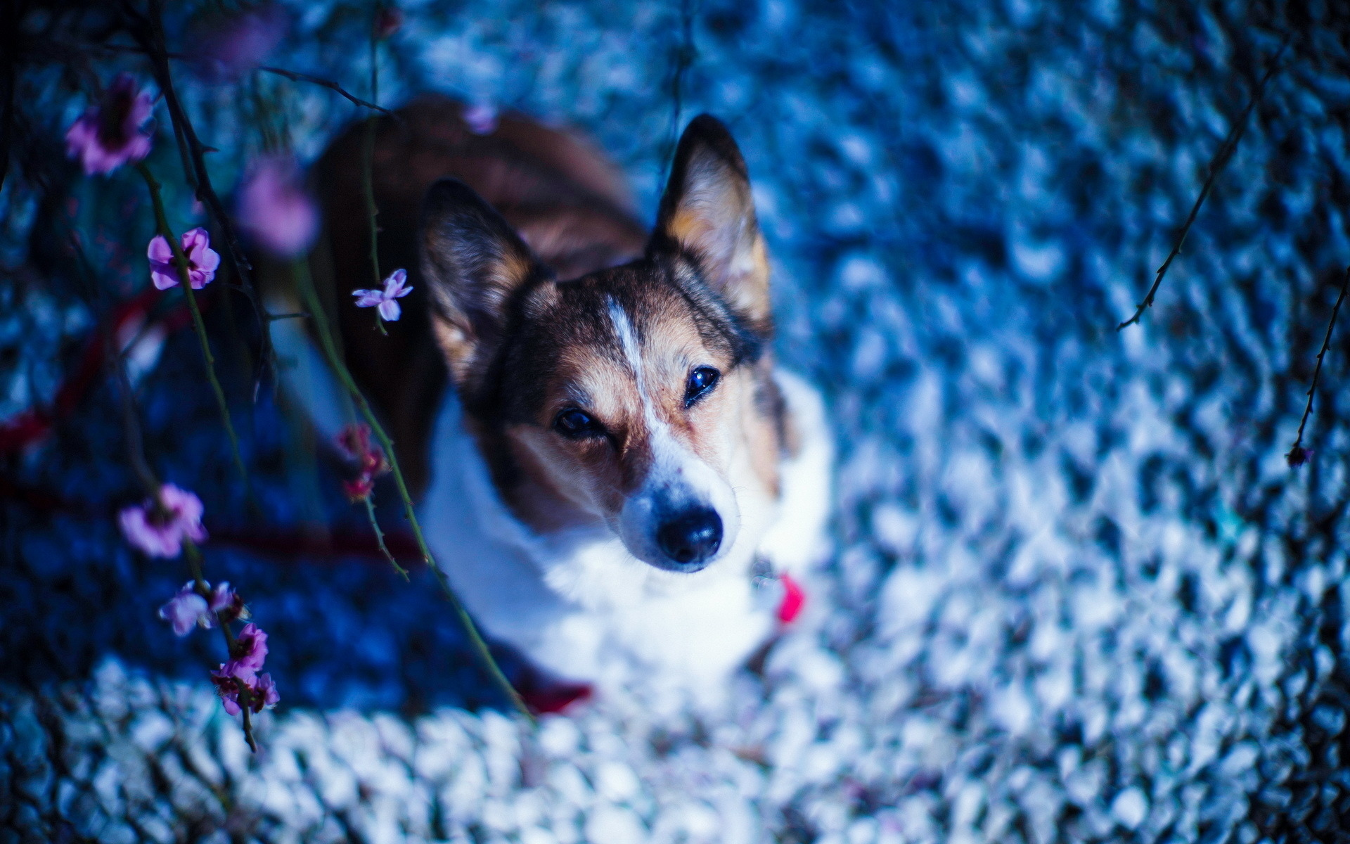 Символ 2018 года — Собака: красивые картинки, фото.