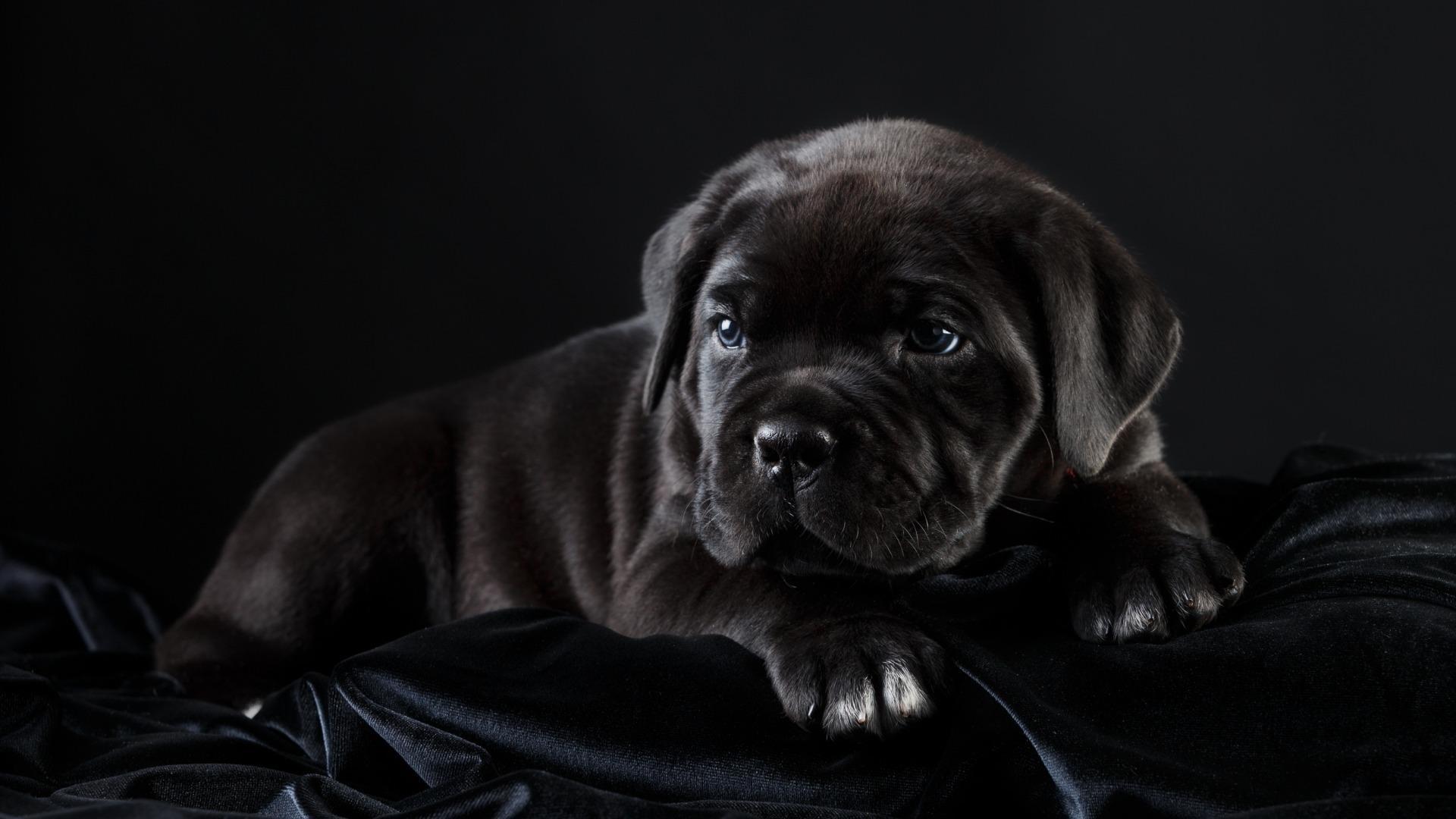 Картинки: чёрная собака