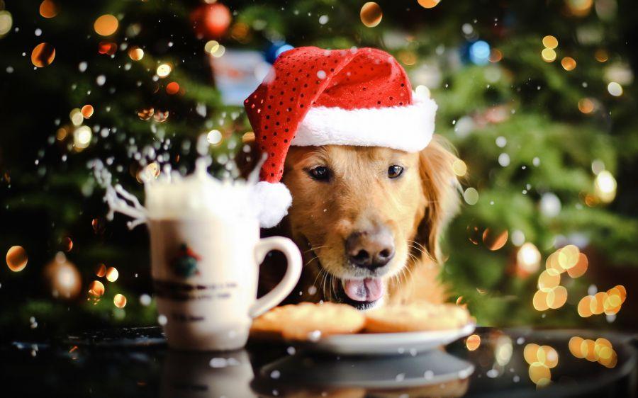 Как встречать Новый год Собаки 2018?