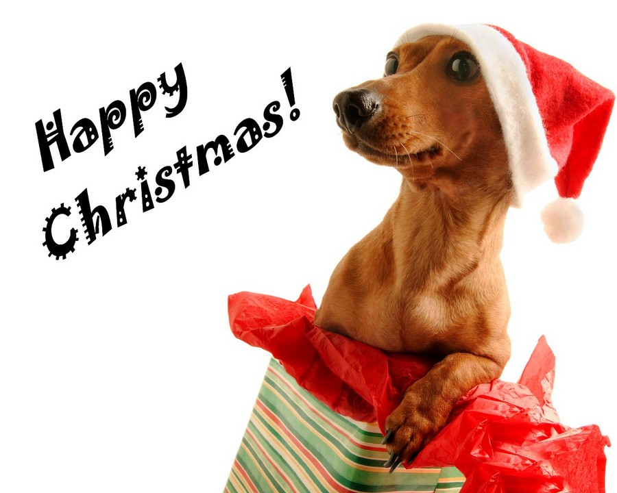 Красивые открытки на Новый год собаки 2018 прикольные фото и картинки
