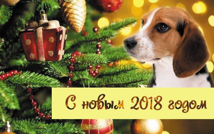 kartinki-pro-novyj-2018-god-12