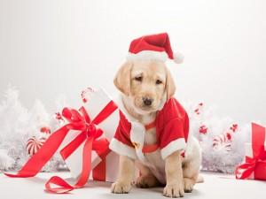 Тосты на Новый год Собаки 2018: смешные, короткие, прикольные.