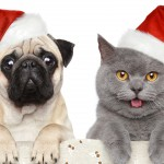 Стихи на Новый год Собаки 2018: смешные, короткие, прикольные