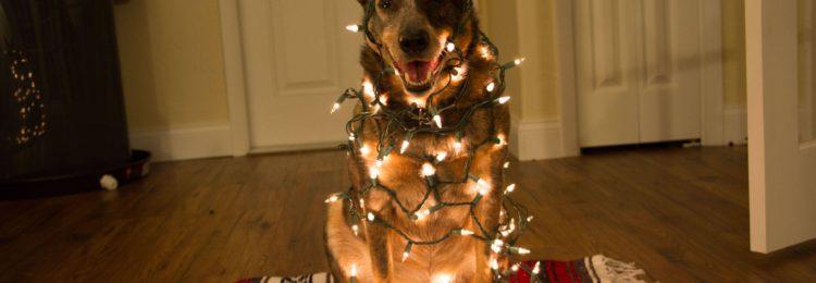 Прикольные СМС поздравления с Новым годом Собаки 2018.