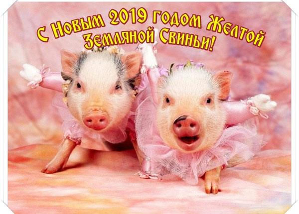 Новогодние картинки в год Свиньи.