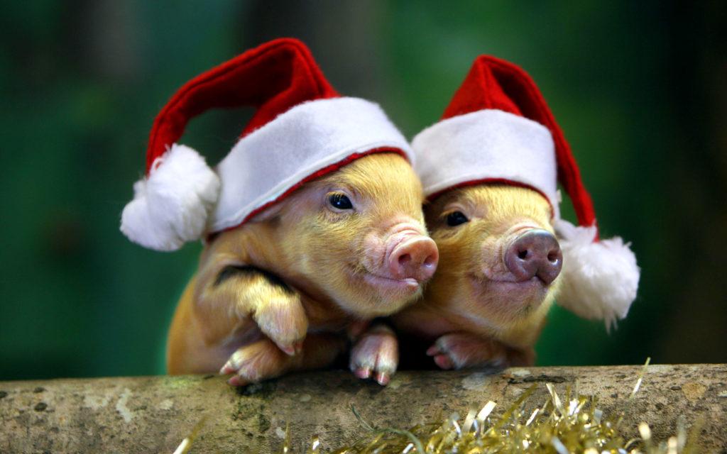 Как встречать Новый год Свиньи 2019?