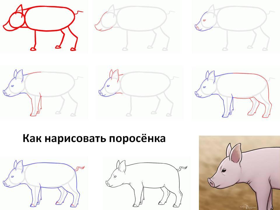 Рисунки на Новый год Свиньи 2019