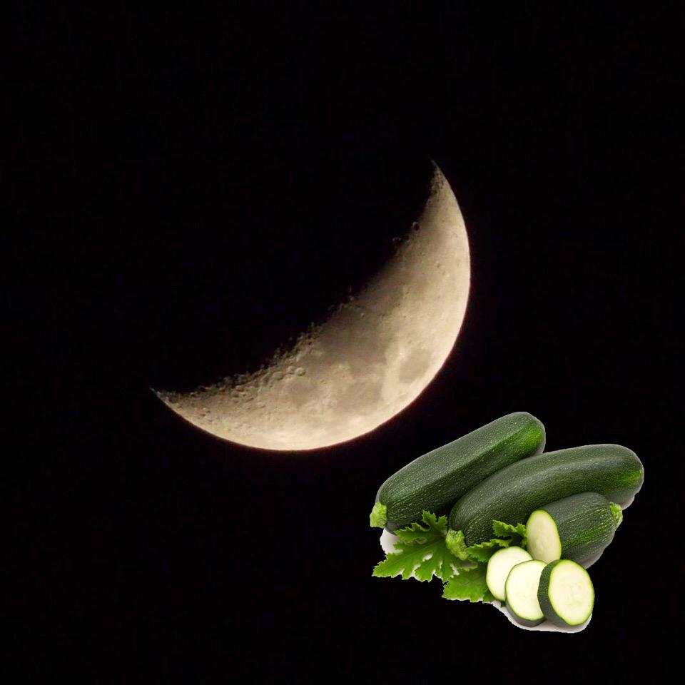Когда сажать кабачки по лунному календарю