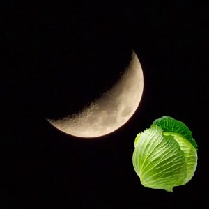 Когда сажать капусту по лунному календарю