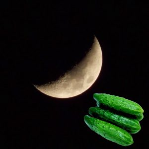 Когда сажать огурцы по лунному календарю
