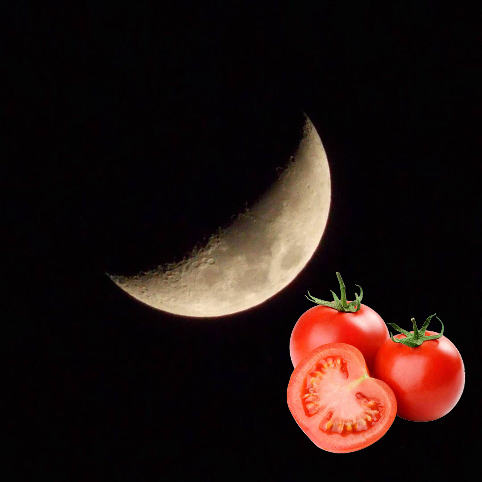Когда сажать томаты по лунному календарю