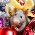 Короткие СМС поздравления с наступающим Новым годом Крысы 2020