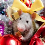 Поздравления в картинках с Новым годом Крысы 2020