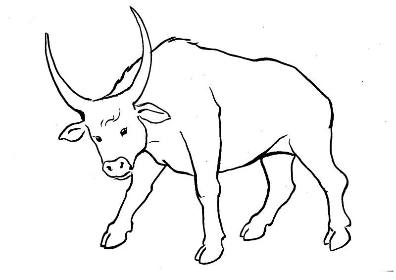 С символом года 2021 - Быком