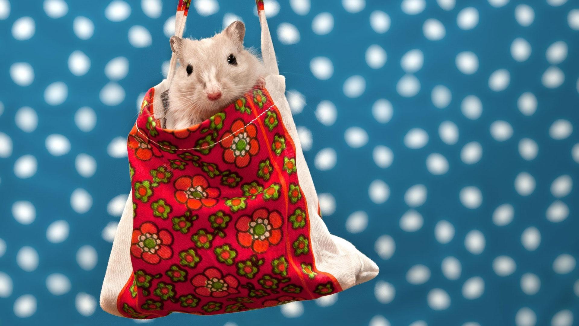 Новогодние картинки с символом 2020 года - Крысой