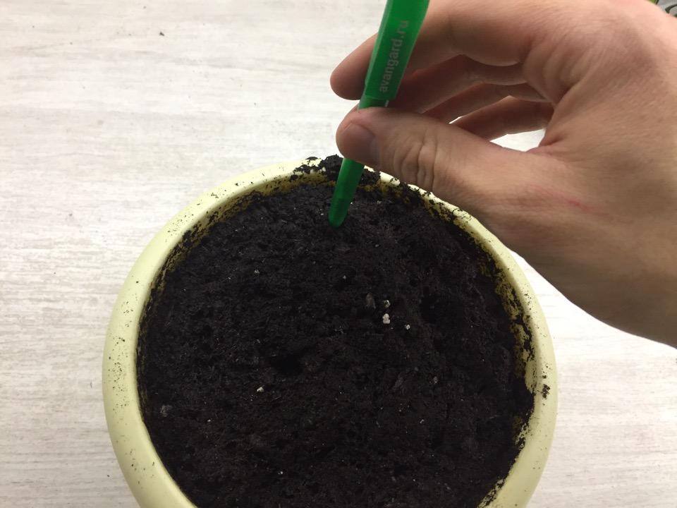 Посев томатов традиционным способом