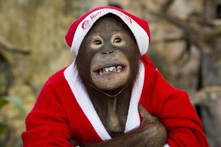 смешные рождественские фото отдел включает себя