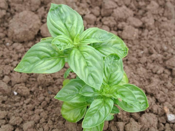 Посев семенами в открытый грунт