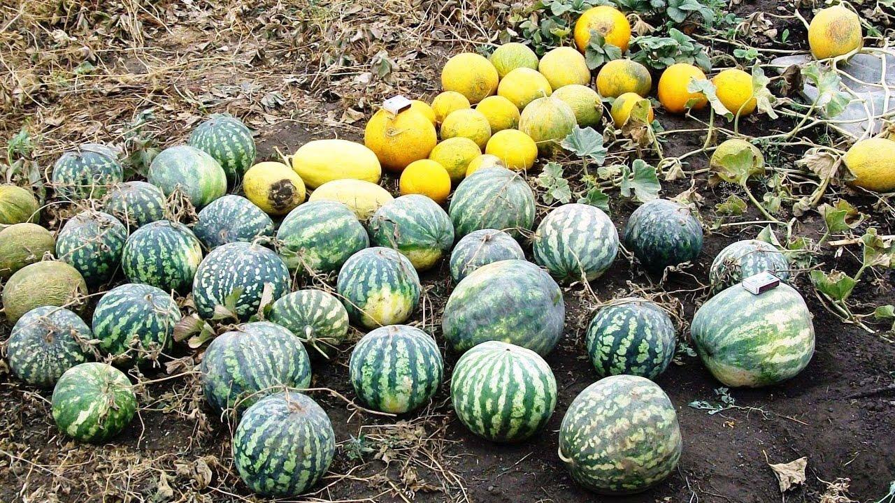 Сроки посева в разных регионах