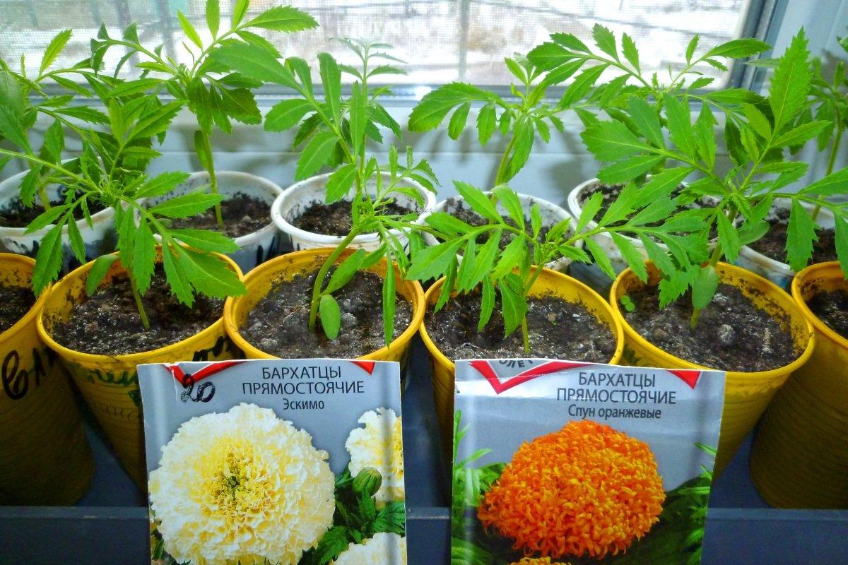 Агротехника посева семян на рассаду