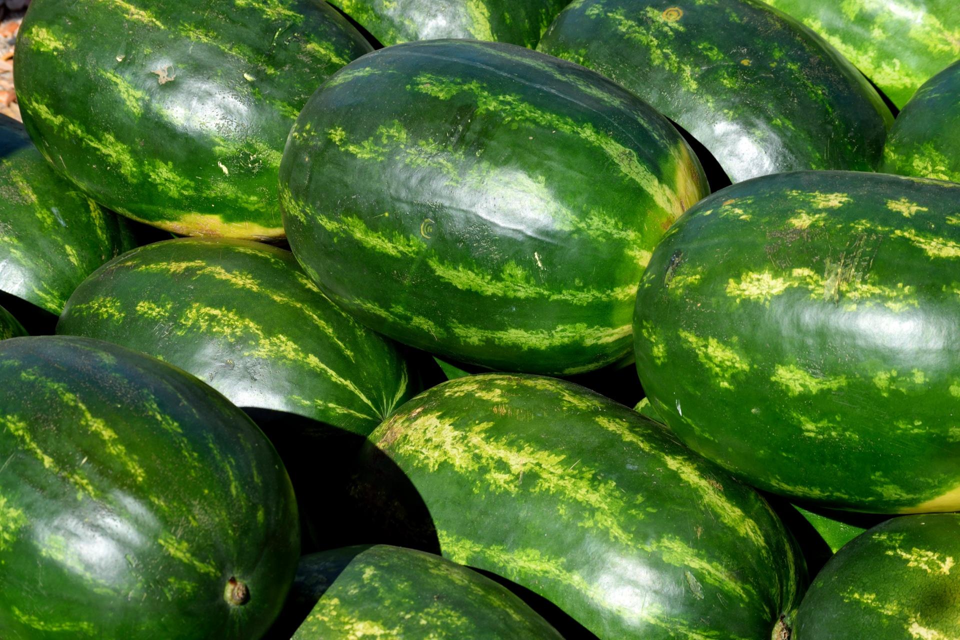 Как выбрать оптимальные сроки для посева арбузов и дынь