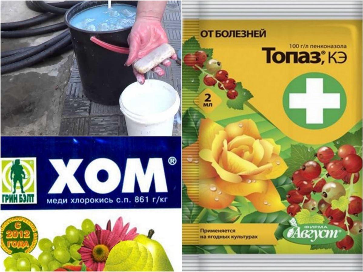 Химические препараты для борьбы с мучнистой росой