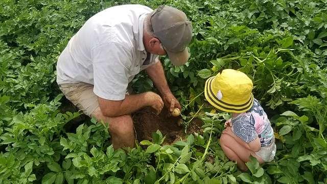 Выращивание картофеля без болезней