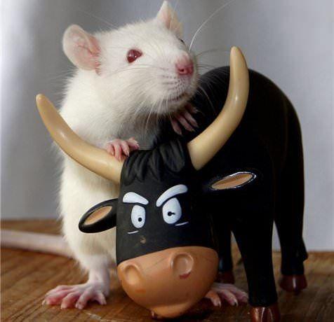 Сценарий с Крысой и Быком на Новый год 2021