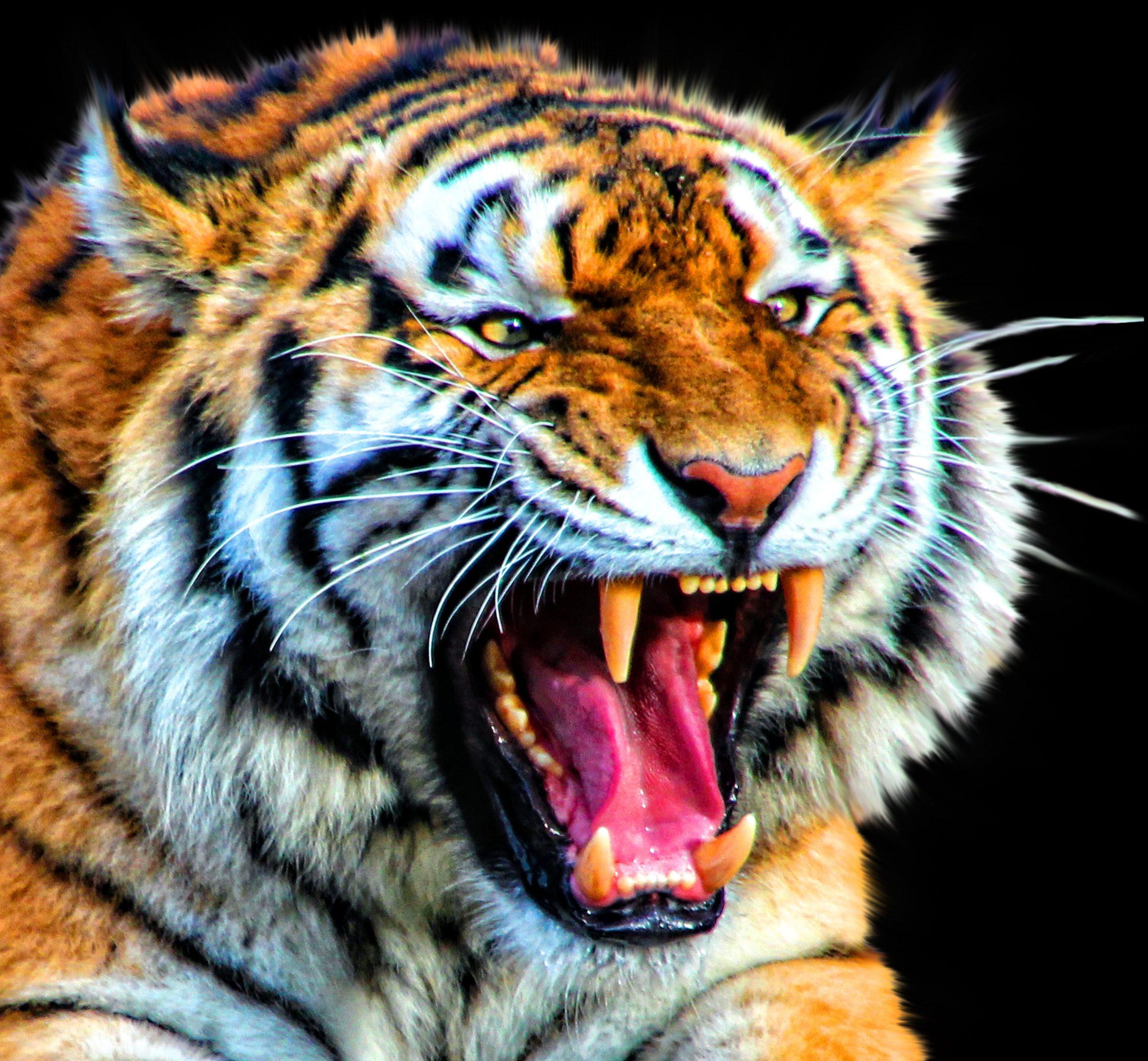 Картинки и фото с символом 2022 года - Чёрным Водяным Тигром