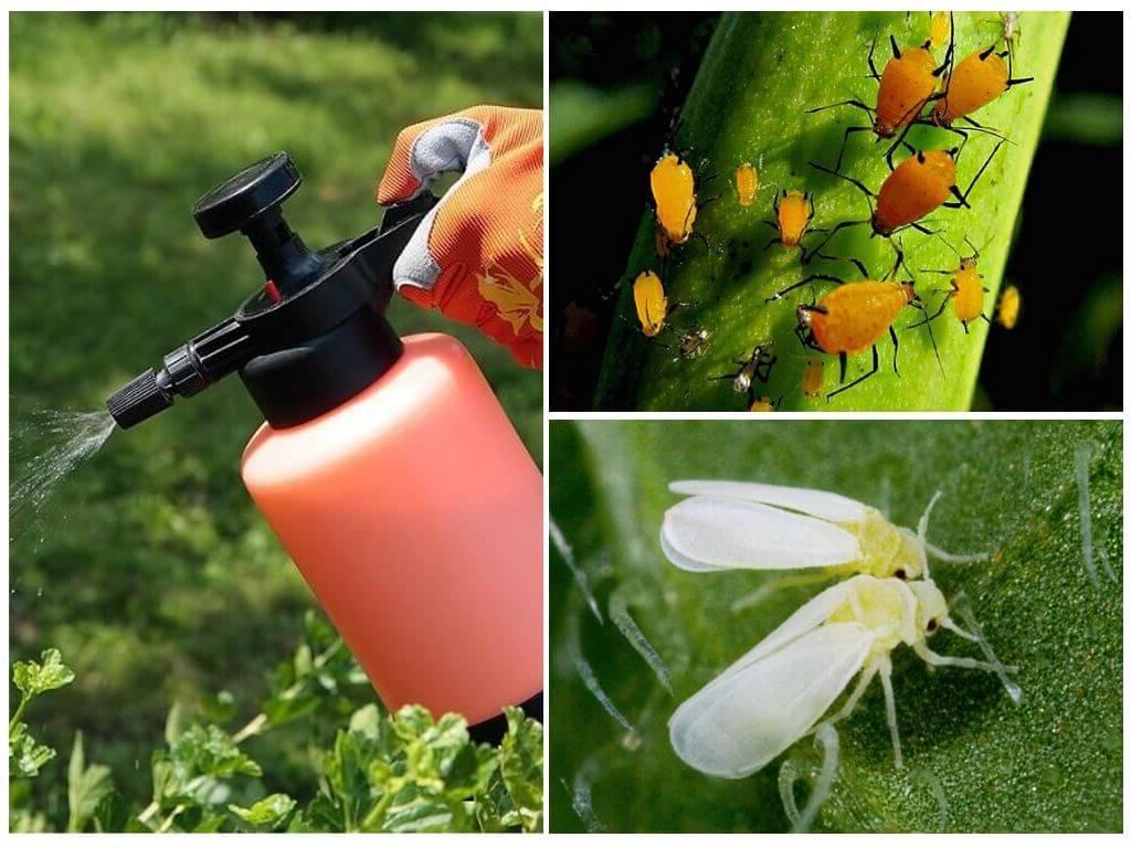 Борьба с вредителями на огороде