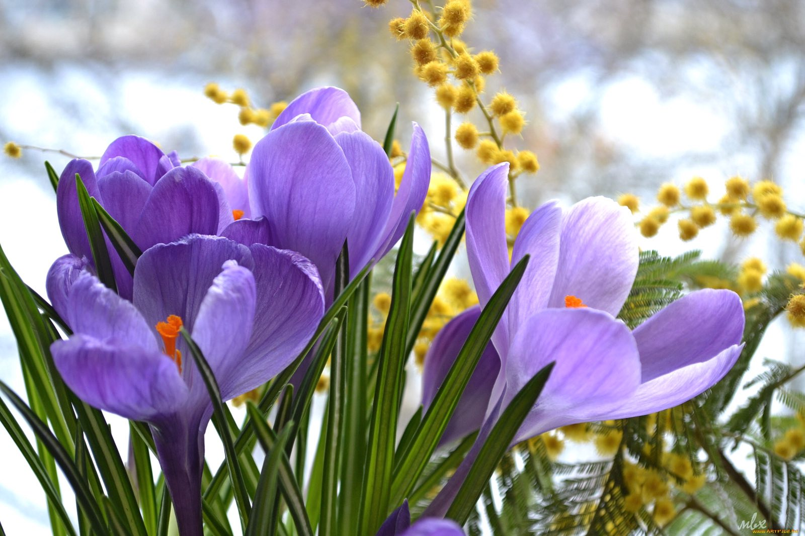 Красивые картинки на 8 марта с весенними цветами
